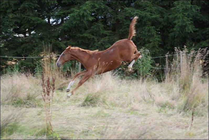 heste fra urtiden